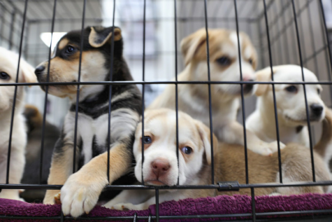 The Truth About Pet Stores