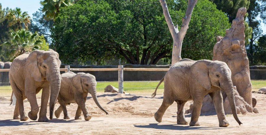 Should You Plan a Visit to the Zoo?