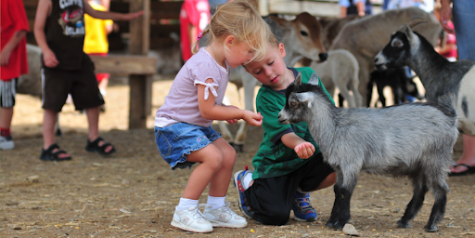 Pros and Cons of Petting Zoos